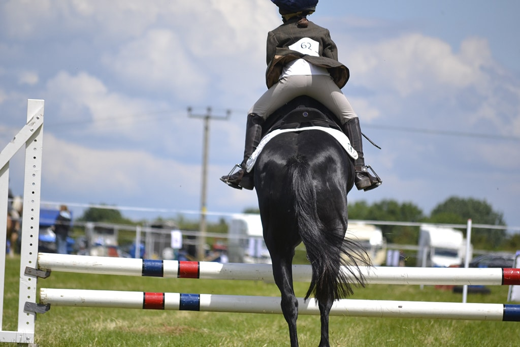 The Best Breeds Of Jumping Horses Sport Horses Vet