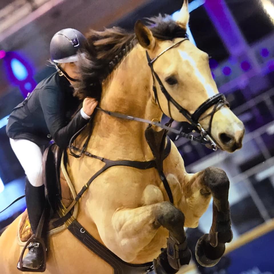 Vetting Jumping Horses Belgium