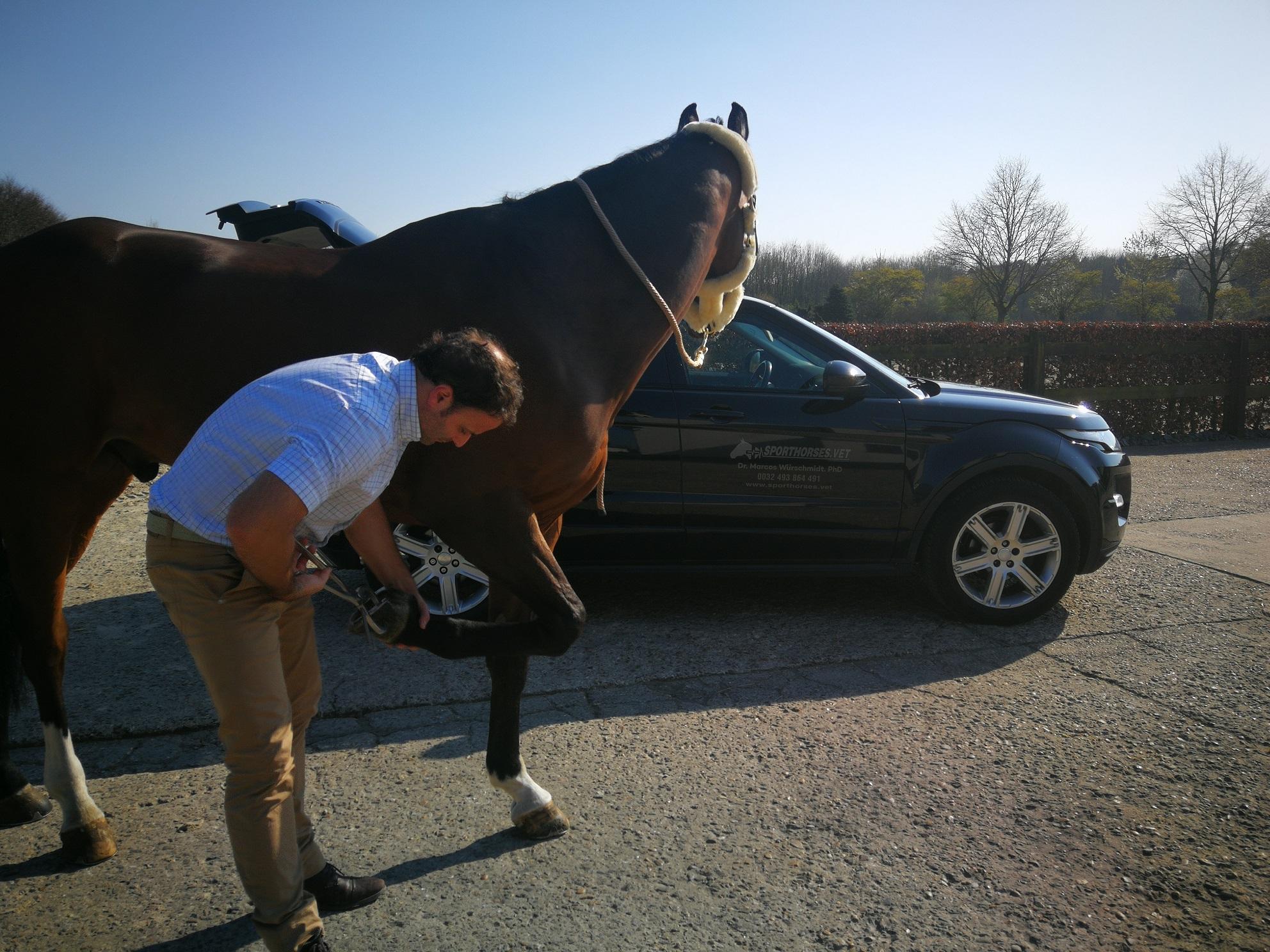 Horses prepurchase exam - clinical examination