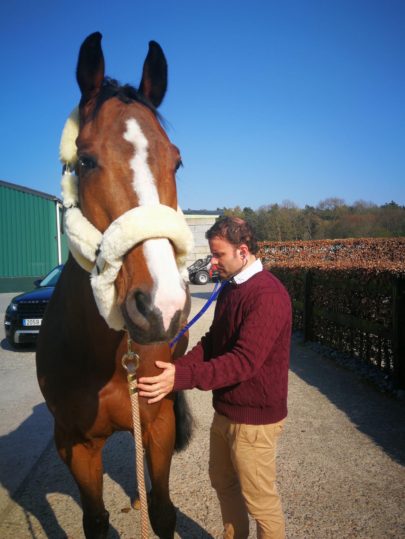 Horse Pre Purchase Exam