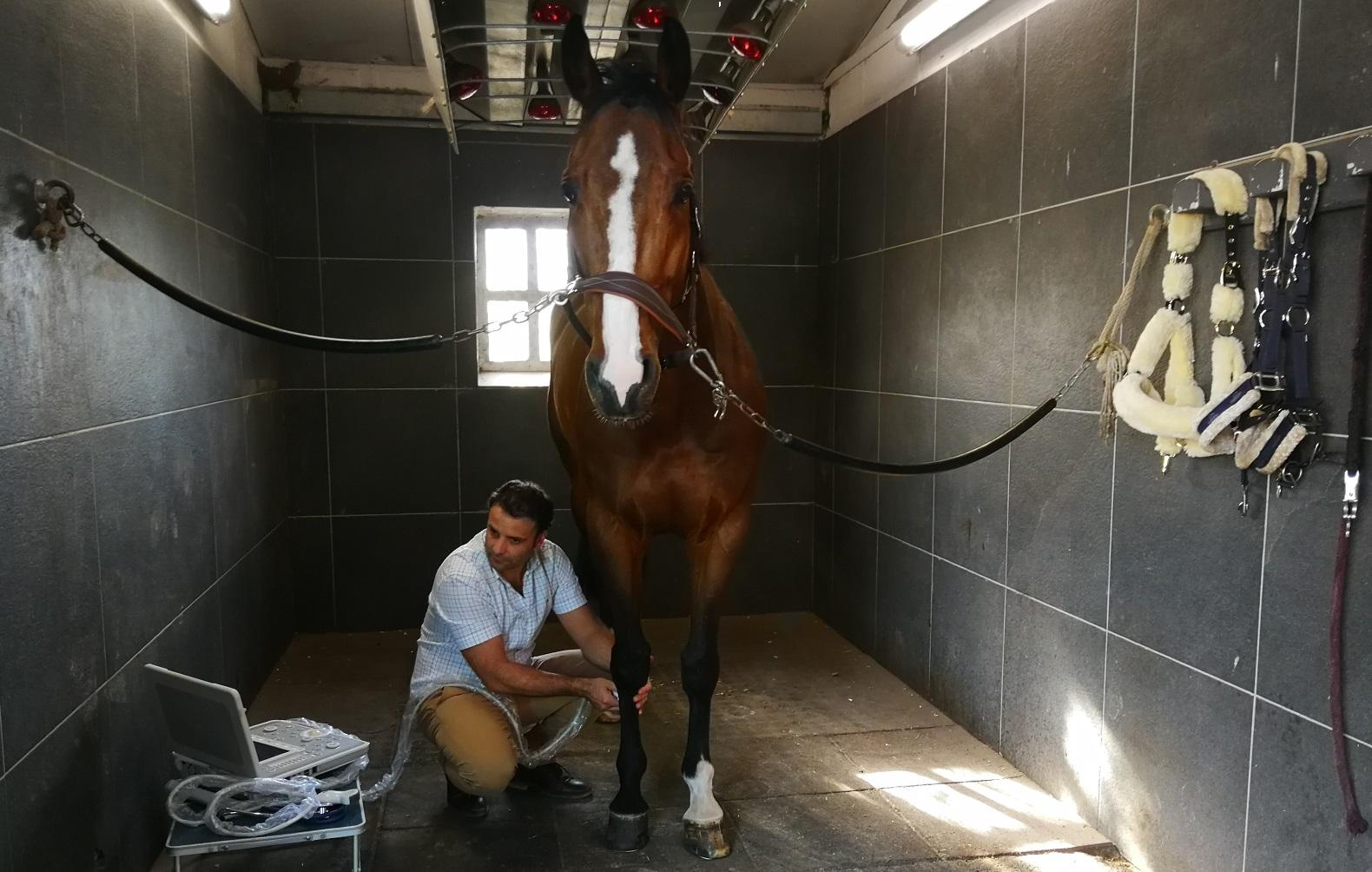 Vetting in Horses - Horses Vet Check