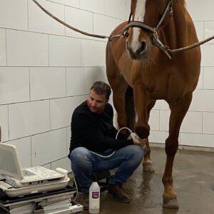 Pre Purchase Horse Exam