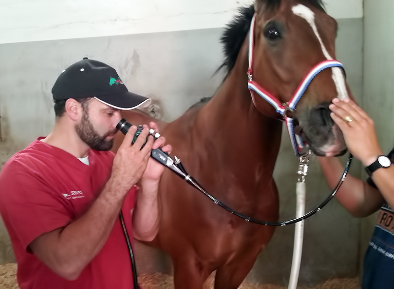 Respiratory Ultrasound in Horses