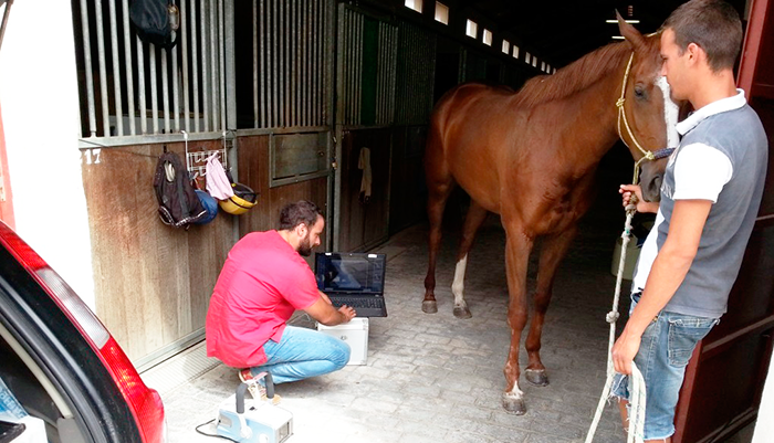 Radiographs in horses
