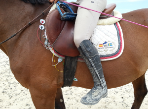 Cardiology in Horses - Holter