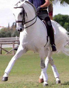 Equine sport medicine