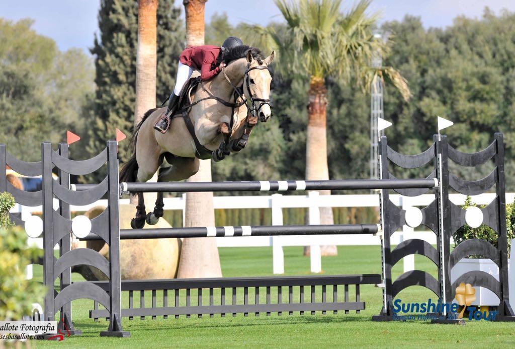horse vet holland