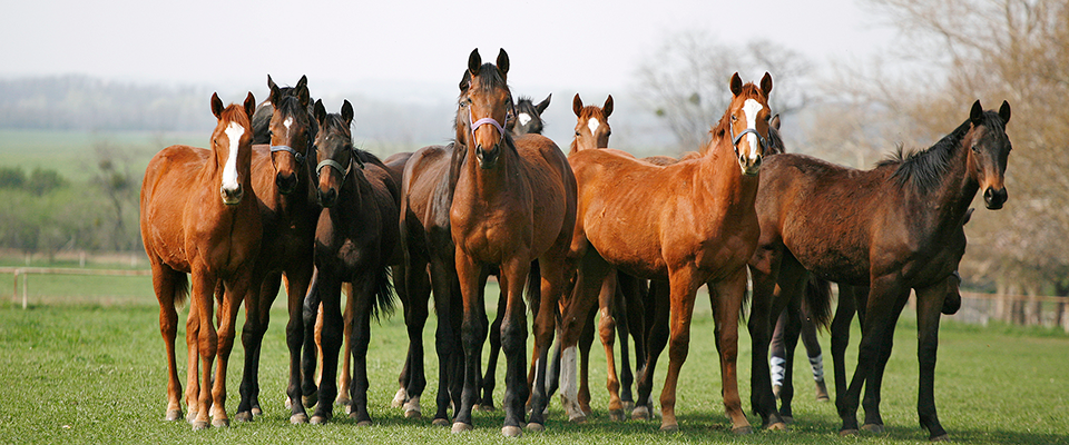 vet check horses malaga