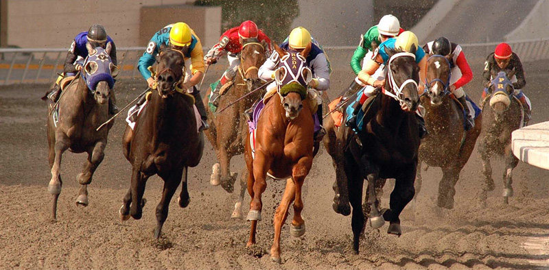 horses vets emergency