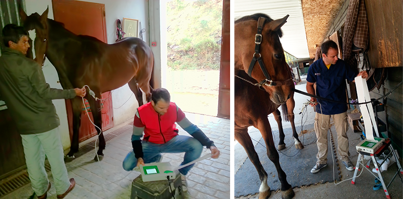 Holter electrocardiogram in horses