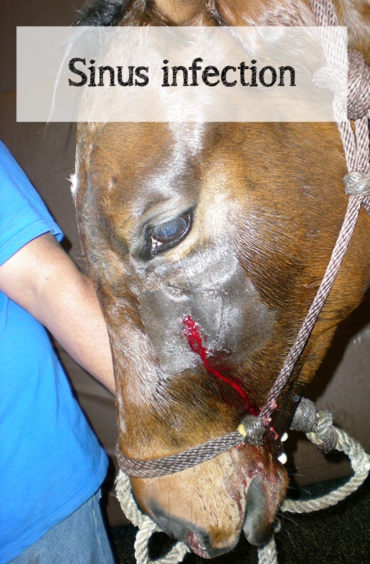 Surgery in horses