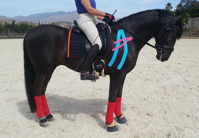 Kinesiotape caballos deporte
