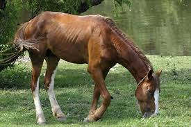 Selenium Deficiency in Sport Horses