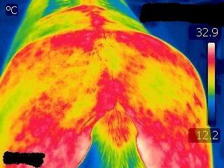 Back pain in horses - horse vet belgium