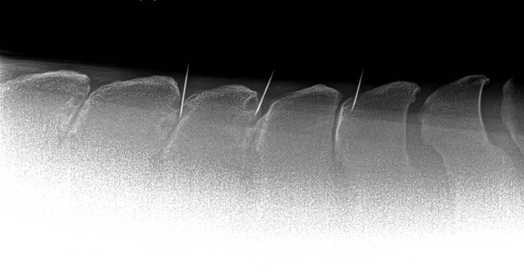 Back pain in horses - horses vet belgium