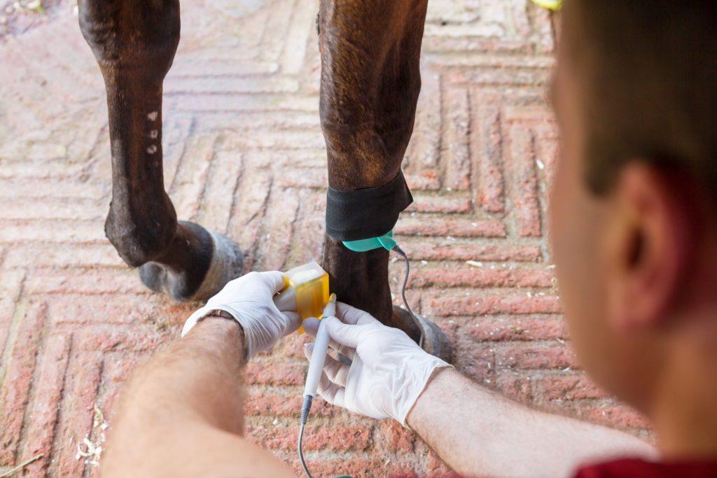 Electrolisis percutánea intratissular (EPI) en caballos