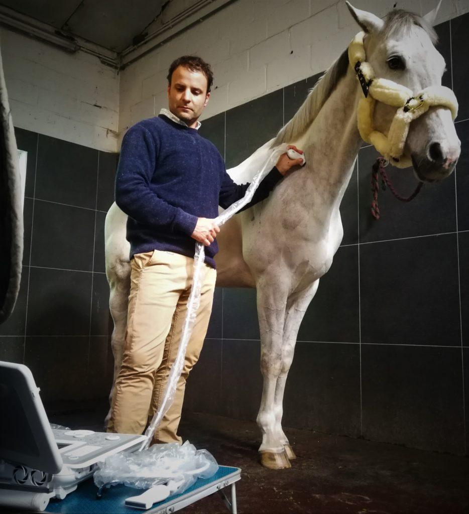 Ultrasound in Horse