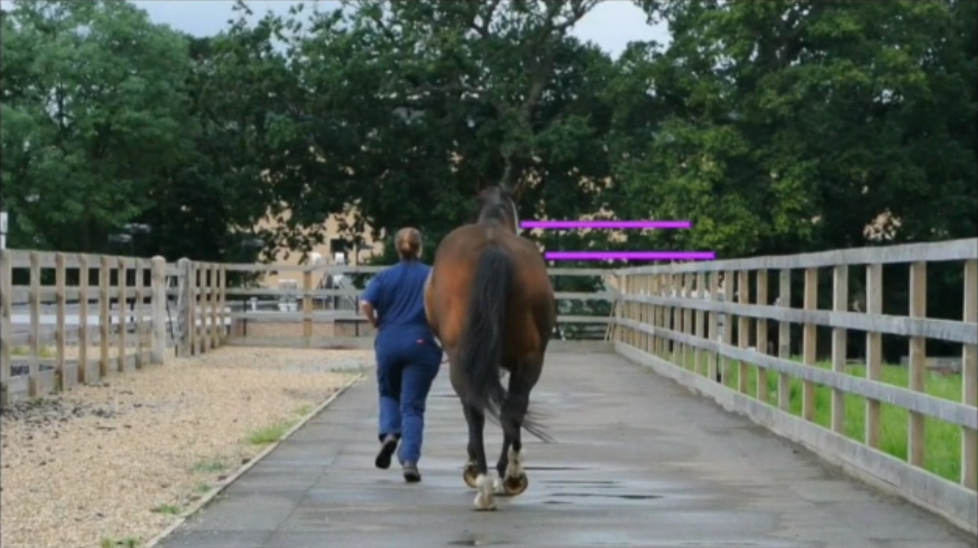 Sacroiliac Disease in Horses